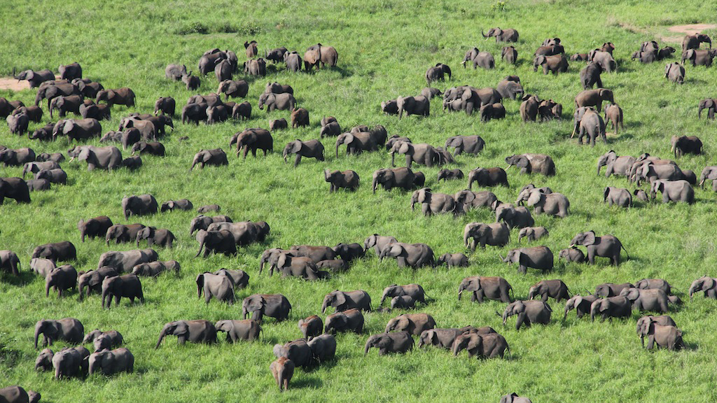 ep 61 many elephants